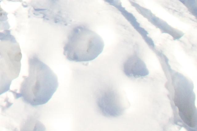 Неудачливого уральского грабителя обезоружила женщина, а следы на снегу привели к нему домой