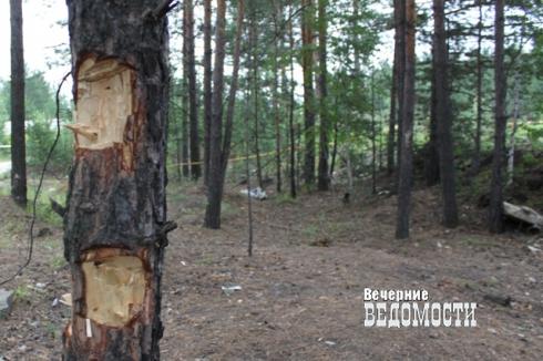 На Урале у черных лесорубов отобрали бензопилы и условно лишили свободы