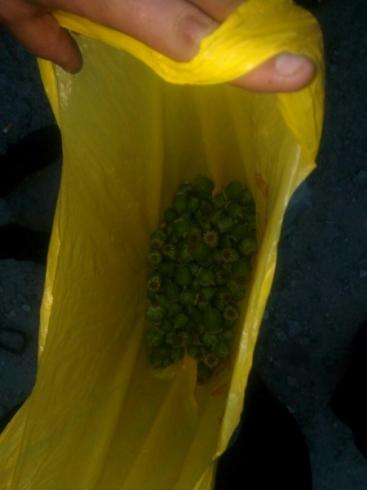 В Тавде полицейские изъяли более 300 грамм мака