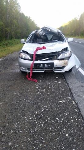 На Серовском тракте водитель легковушки сбил лося