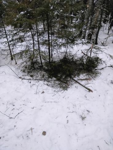 Кушвинские подростки выжили в лесу, согреваясь о своих собак